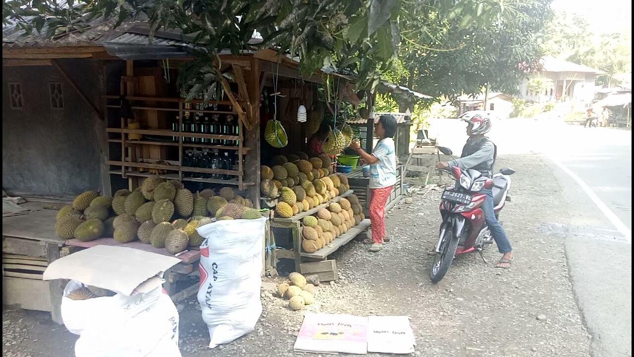 Musim Durian Tingkatkan Ekonomi Masyarakat Ako