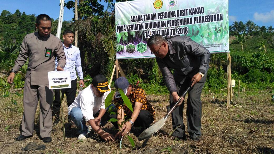 Kementerian Pertanian RI Salurkan Bantuan Bibit di Mamuju