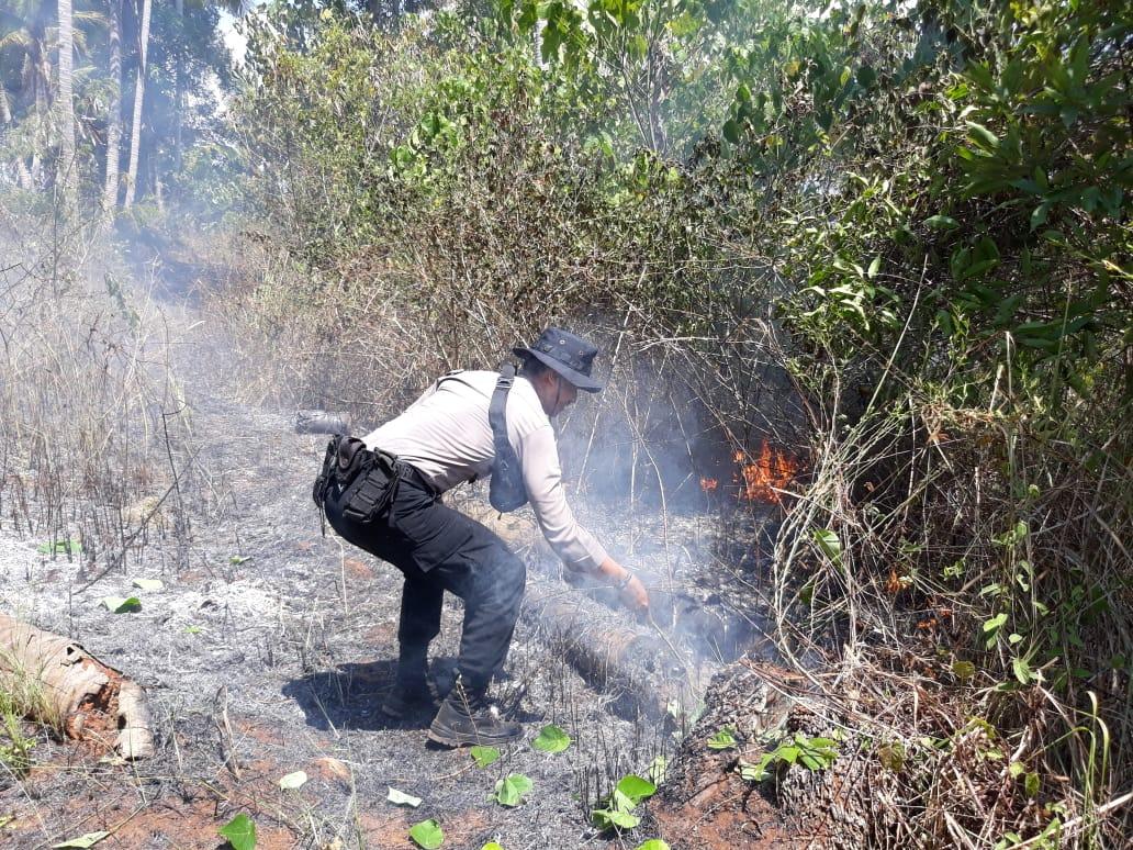 Anggota Polres Mamuju Berjibaku Padamkan Kebakaran Hutan