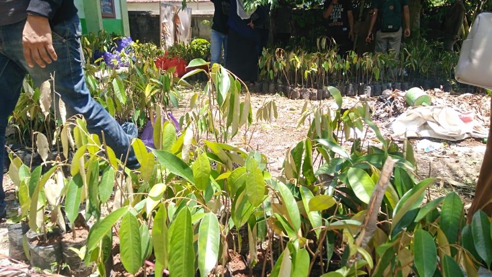 7.500 Pohon Bibit Durian Didistribusikan UPTD KPH Karama