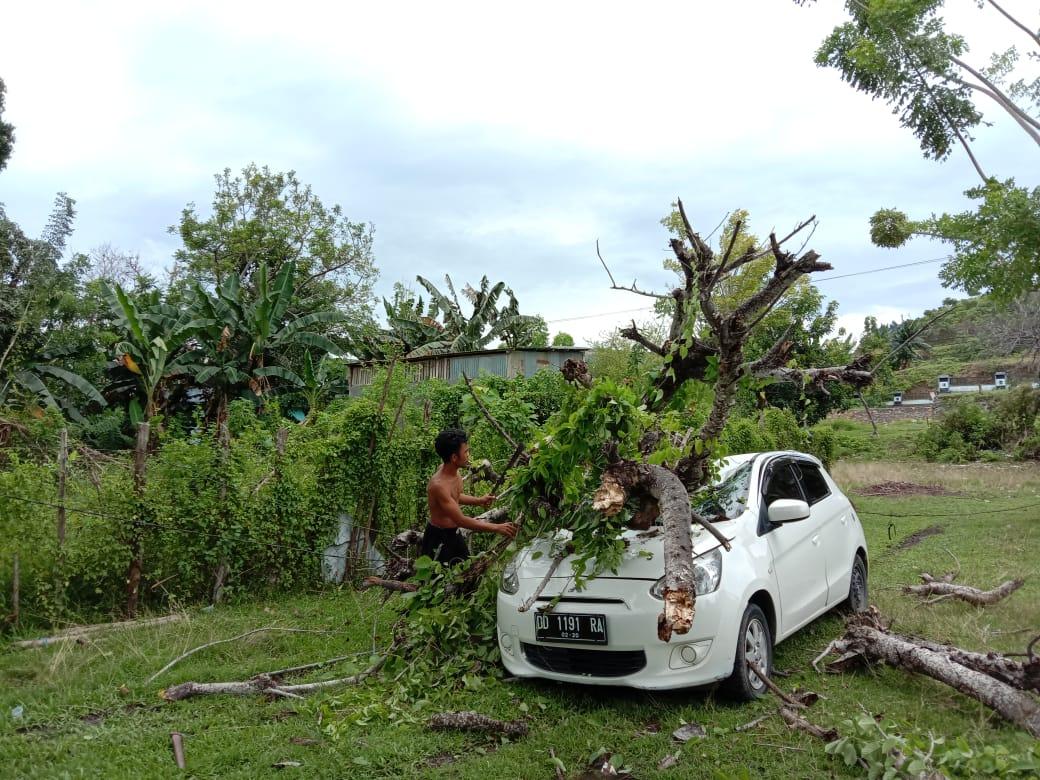 Mobil Parkir Hancur Ditimpa Pohon
