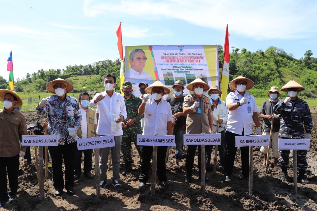 Gubernur Sulbar Canangkan 300 Hektar Penanaman Kedelai di Polman