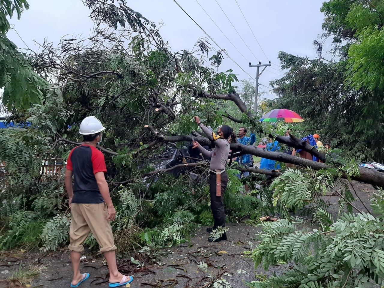 Polisi dan Warga Dimajene Kerjasama Singkirkan Pohon Tumbang